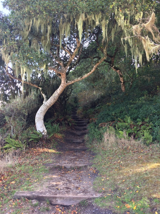 Tree bent over stepped path